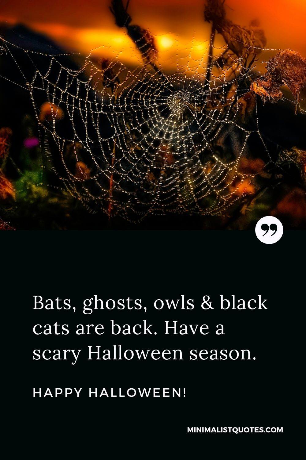 Happy Halloween Wishes- Bats, ghosts, owls & black cats are back. Have a scary Halloween season.