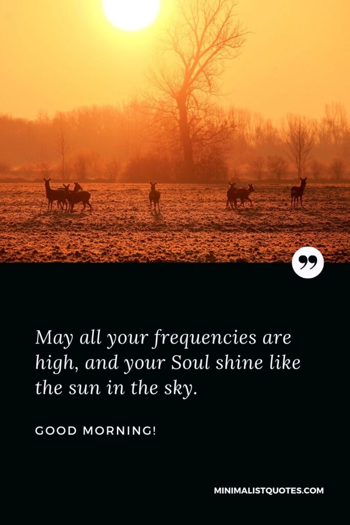 Good Morning Wish & Message With Image: May all your frequencies are high, and your Soul shine like the sun in the sky.