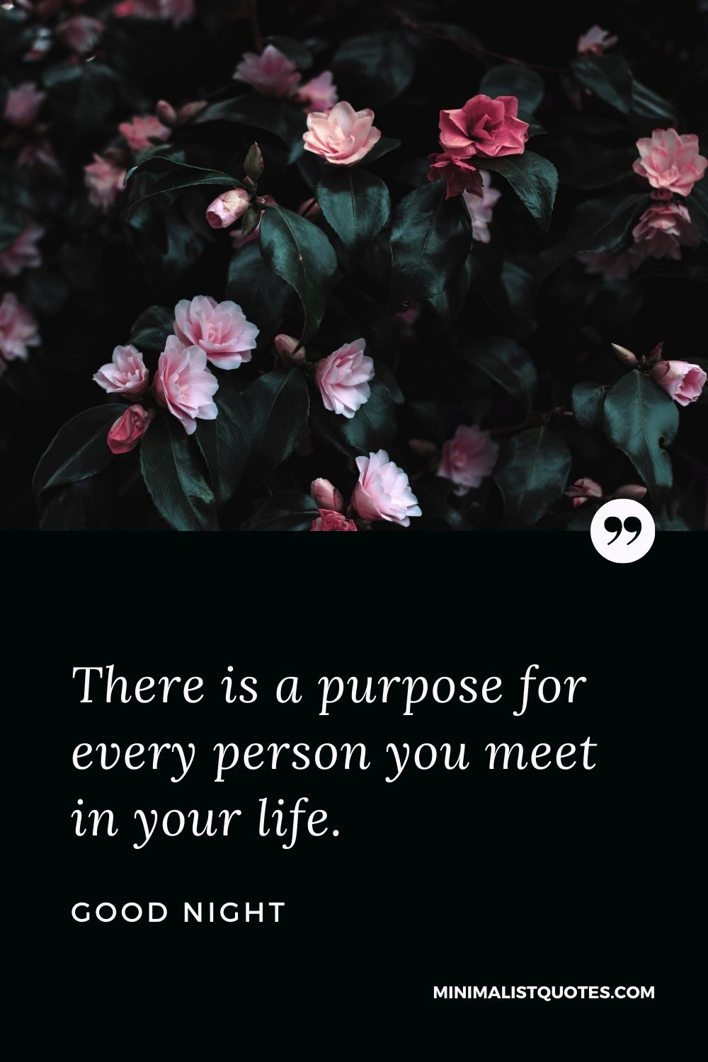 Good Night Wish & Message With Image: There is a purpose for every person you meet in your life.
