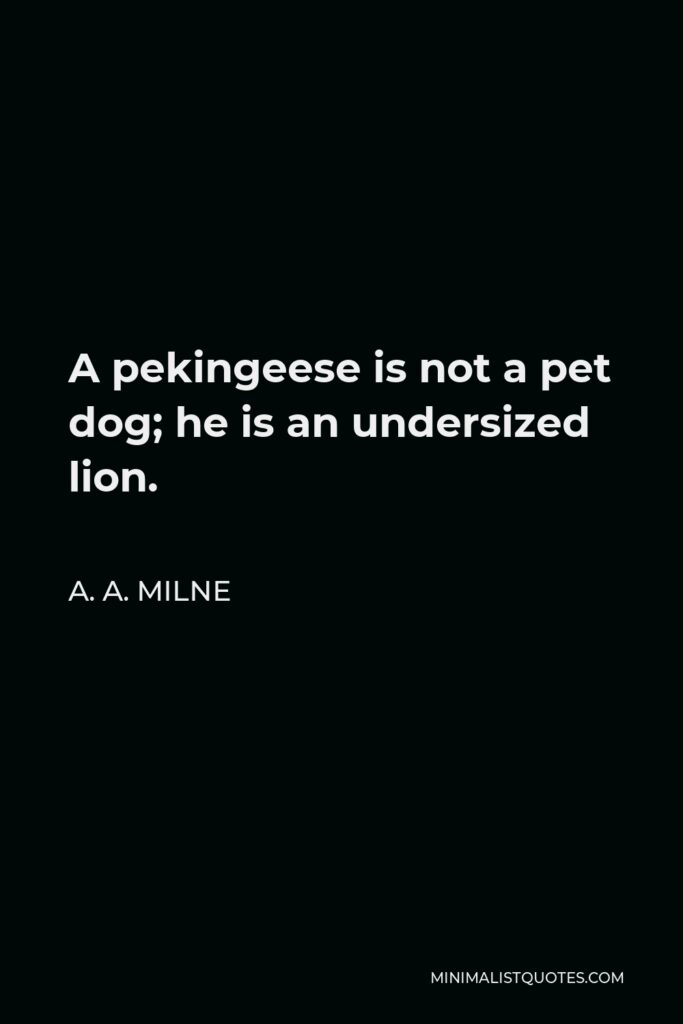 A. A. Milne Quote - A pekingeese is not a pet dog; he is an undersized lion.