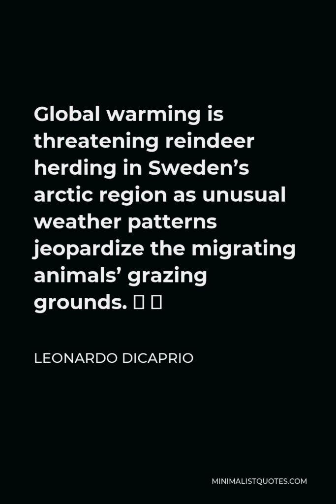 Leonardo DiCaprio Quote - Global warming is threatening reindeer herding in Sweden's arctic region as unusual weather patterns jeopardize the migrating animals' grazing grounds.  