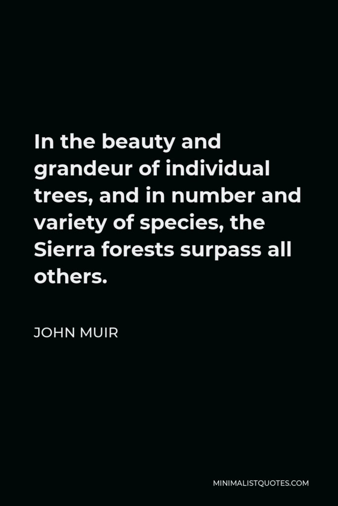 John Muir Quote - In the beauty and grandeur of individual trees, and in number and variety of species, the Sierra forests surpass all others.