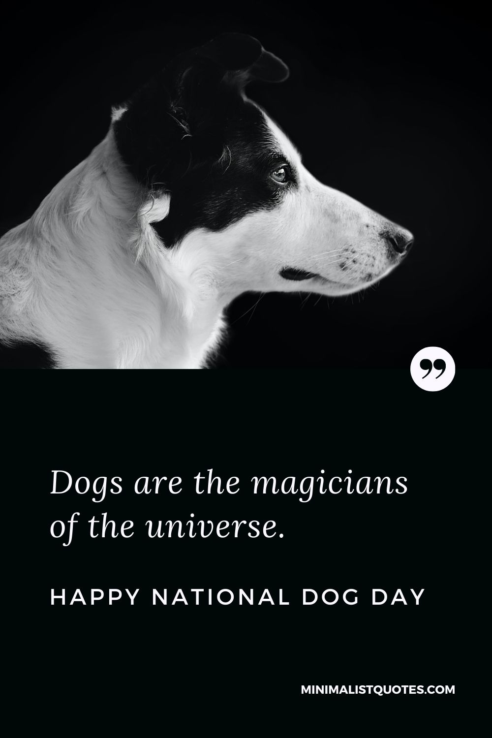 National Dog Day Quote, Wish & Message With Image: Dogs are the magicians of the universe. Happy National Dog Day!