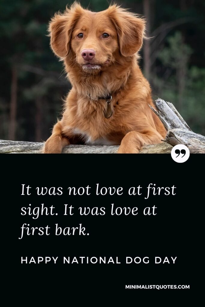 National Dog Day Quote, Wish & Message With Image: It was not love at first sight. It was love at first bark. Happy National Dog Day!
