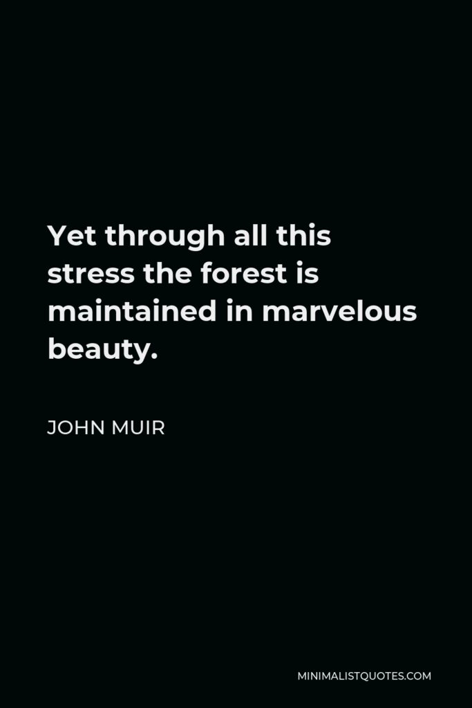 John Muir Quote - Yet through all this stress the forest is maintained in marvelous beauty.