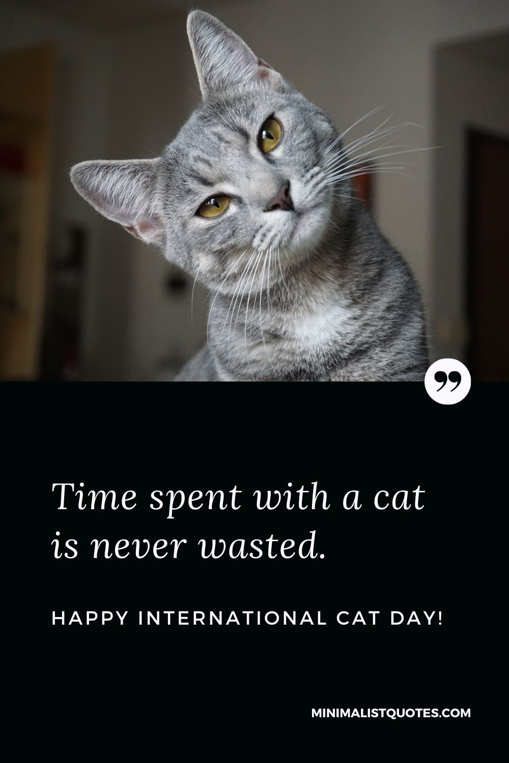 International Cat Day Quote, Wish & Message With Image: Time spent with a cat is never wasted. Happy International Cat Day!