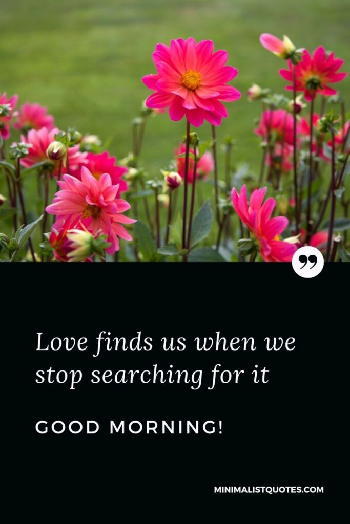 Morning Quote, Wish & Message With Image: Love finds us when we stop searching for it. Good Morning!