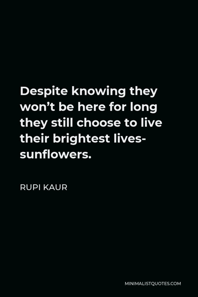 Rupi Kaur Quote - Despite knowing they won't be here for long they still choose to live their brightest lives- sunflowers.