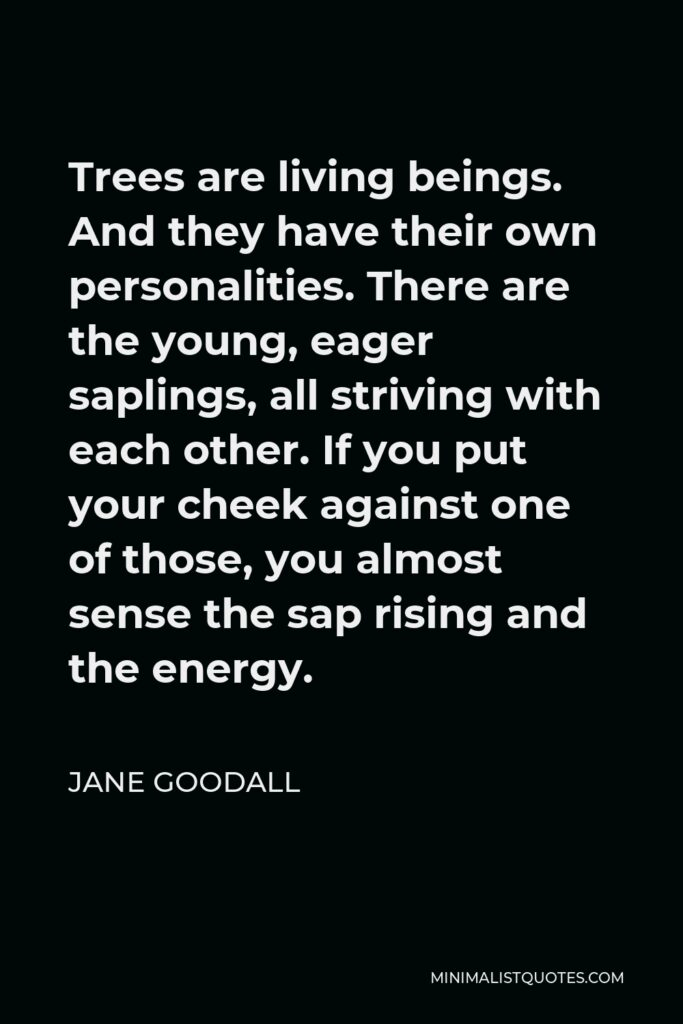 Jane Goodall Quote - Trees are living beings. And they have their own personalities. There are the young, eager saplings, all striving with each other. If you put your cheek against one of those, you almost sense the sap rising and the energy.