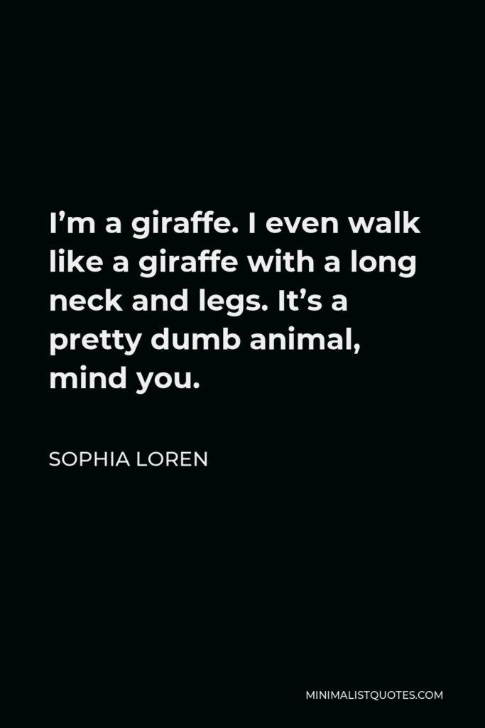 Sophia Loren Quote - I'm a giraffe. I even walk like a giraffe with a long neck and legs. It's a pretty dumb animal, mind you.